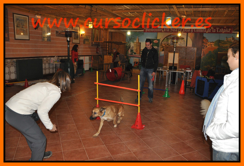 primer cap3 espaa enero 2012learning about dogs y www.cursoclicker.es con helen phillips058