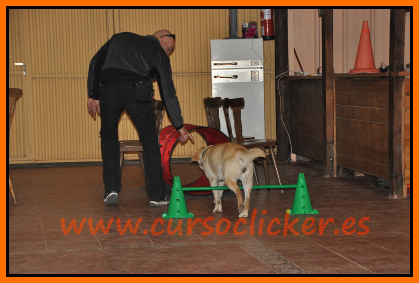 primer cap3 espaa enero 2012learning about dogs y www.cursoclicker.es con helen phillips072