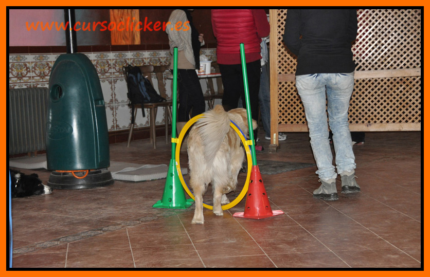 primer cap3 espaa enero 2012learning about dogs y www.cursoclicker.es con helen phillips082