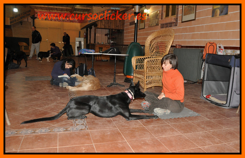 primer cap3 espaa enero 2012learning about dogs y www.cursoclicker.es con helen phillips193