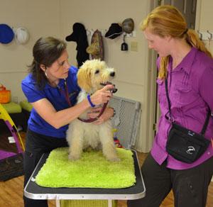 checkup-at-the-vet